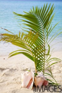 shell and palm decor for beach wedding