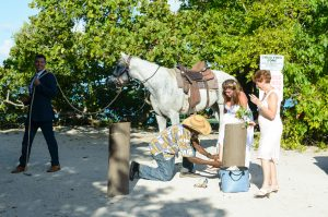 Horse at Lindquist Bay Beach Wedding